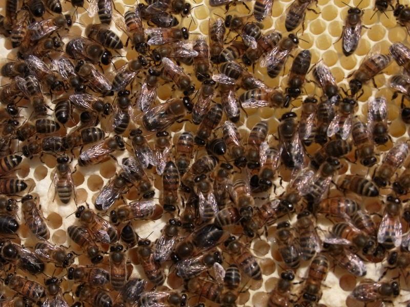 Mes abeilles 02-06-12