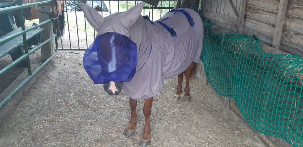 Vera de liberté poney shetland 10743611