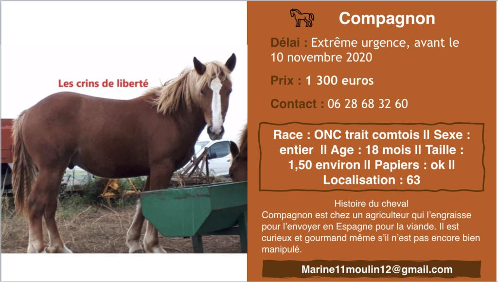Dpt 63 - Compagnon - trait - 1 an réservé par Florian et Morganne ! (nov 2020) Captur89
