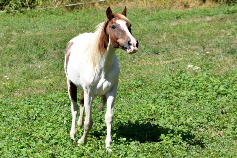 Cochise, ONC cheval Dsc_0095