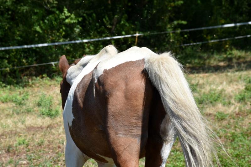 Cochise, ONC cheval Dsc_0098