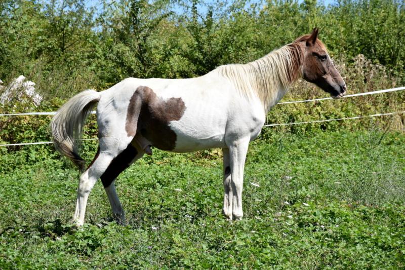 Cochise, ONC cheval Dsc_0099