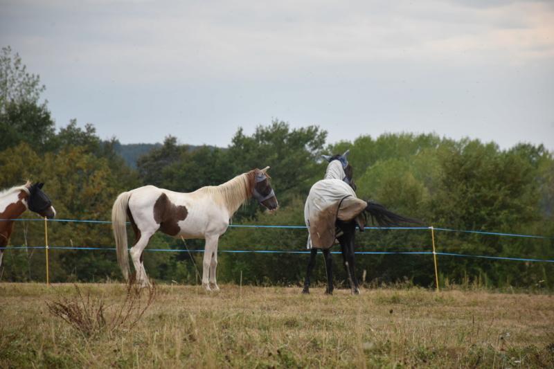 Cochise, ONC cheval Dsc_0162