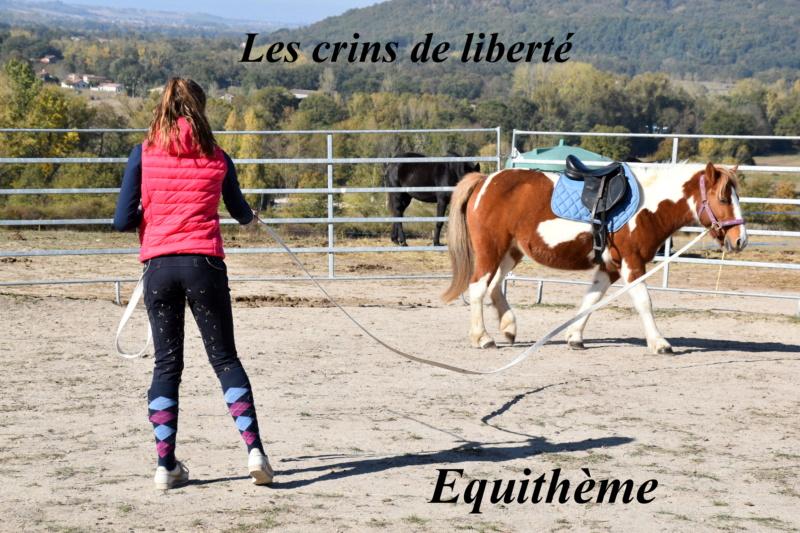 Equithème - Page 2 Dsc_0247