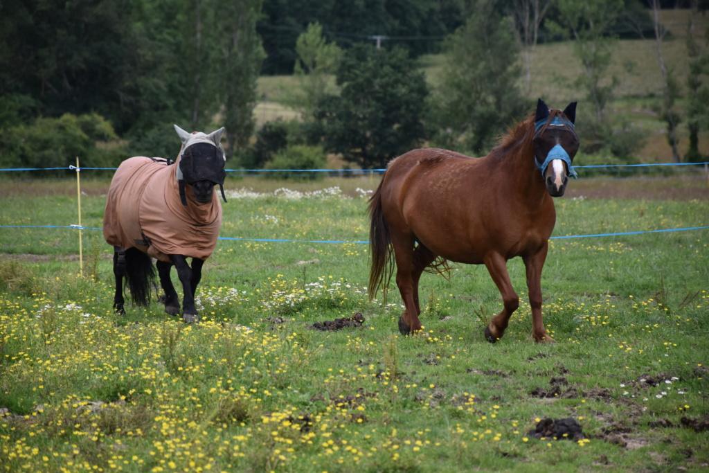 Vera de liberté poney shetland Dsc_0944