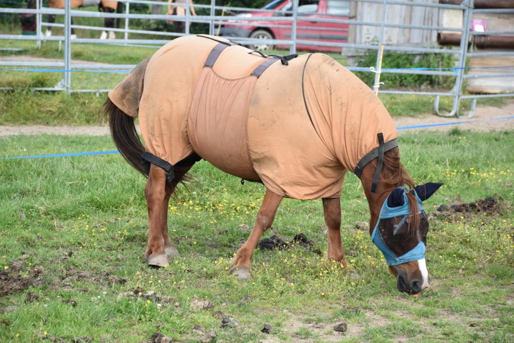 Vera de liberté poney shetland Dsc_0945