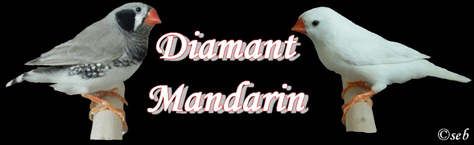 Diamant-Mandarin