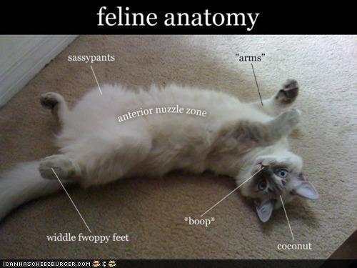 A bilology lesson Cat_an11