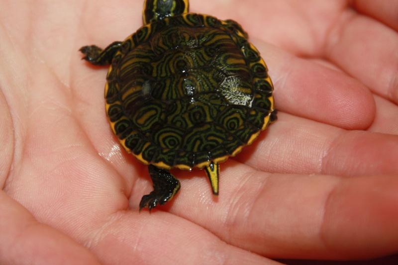 identification de notre tortue Img_0511