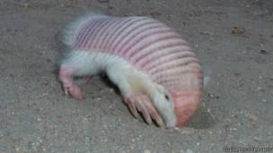 34 animales en peligro de extinción en Argentina 14012110