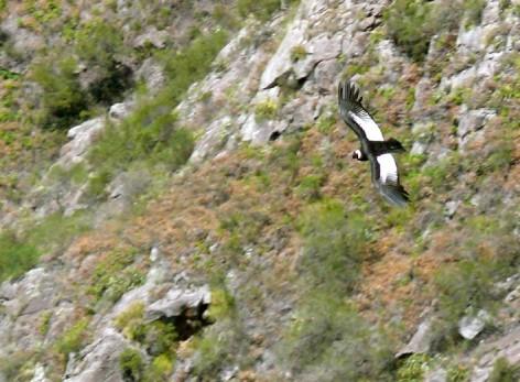 34 animales en peligro de extinción en Argentina 472x_210