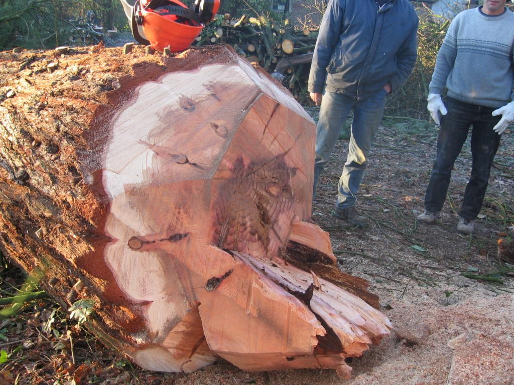 Table en séquoia  Img_1513
