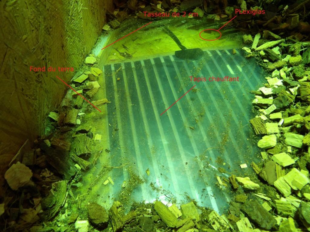 Terrarium pour pogona vitticeps (Heat pad) 100_0710
