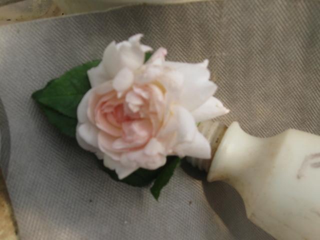 boutures de rosiers Roses_14