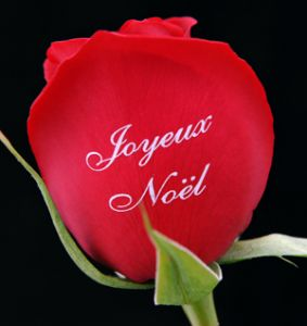 Une rose à offrir n°2 - Page 21 Cce59910