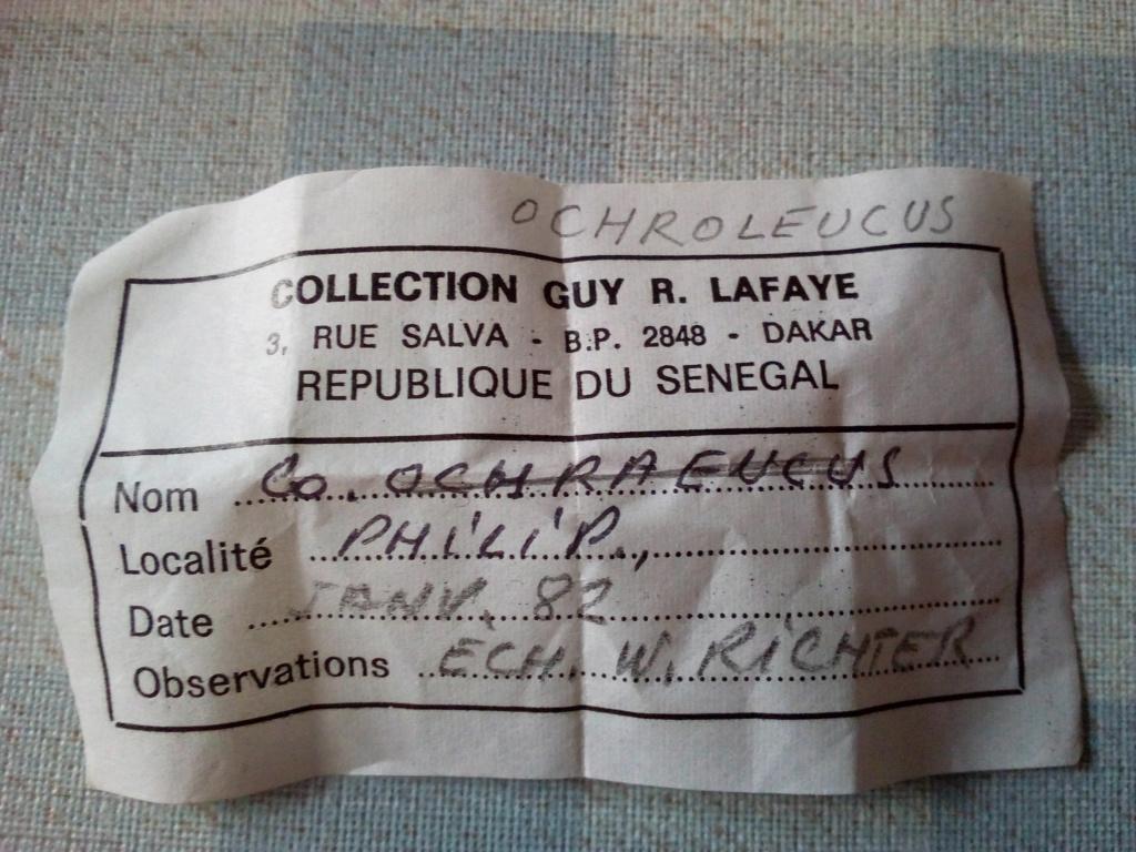 Brocante Noirmoutier-en-l'île jeudi 13 juillet Img_2177