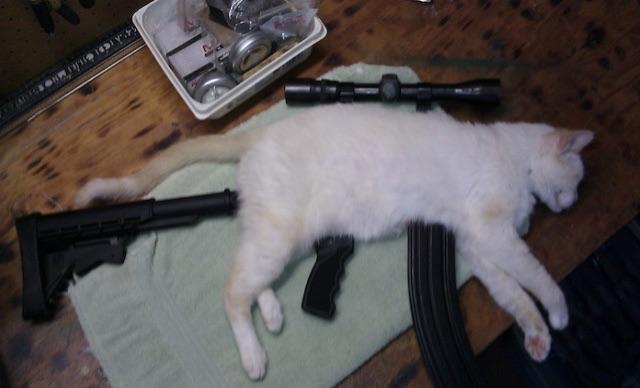 Identification armes trouvé à la SPA Chat10