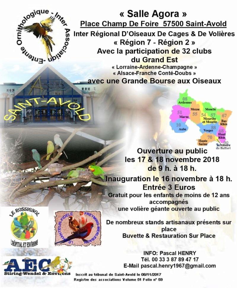 Inter régional d'oiseaux, Saint-Avold 17 et 18 novembre 2018 Inter_10
