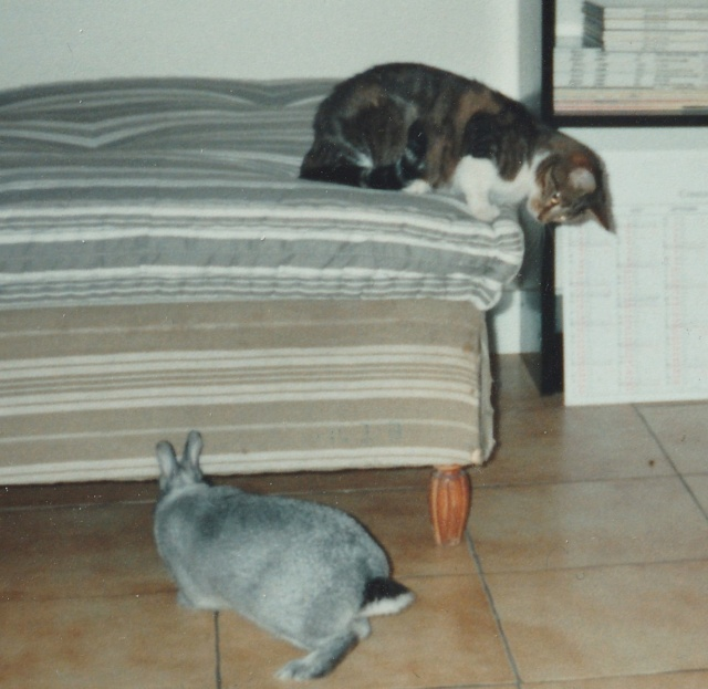 Lapin, chat, chien Img_2045