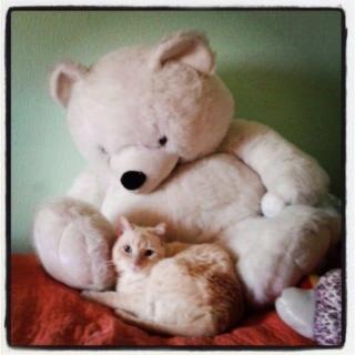 Fábula del oso y el gato (Soneto) 12689910