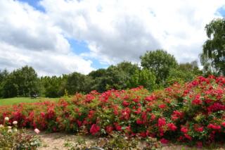 Le parc de la colline aux oiseaux à Caen Dsc_4818
