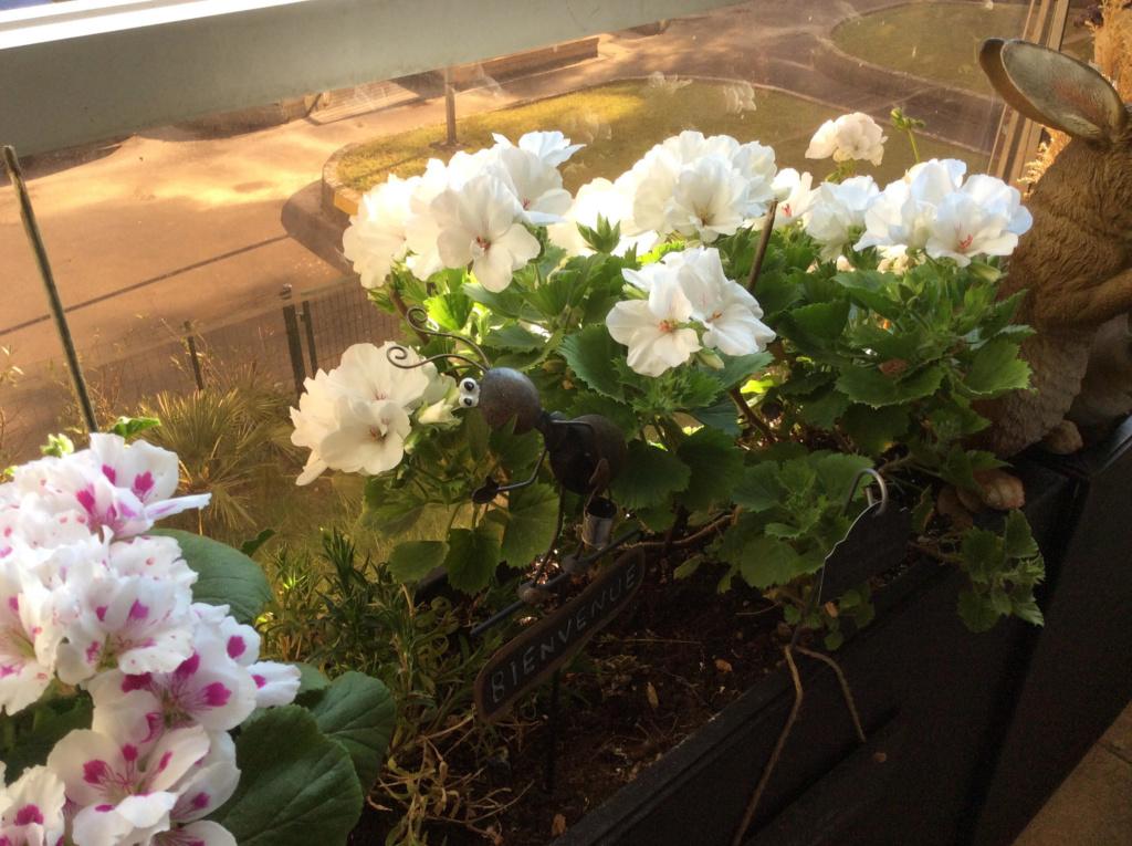 Mon balcon, c'est mon jardin.. Unname11