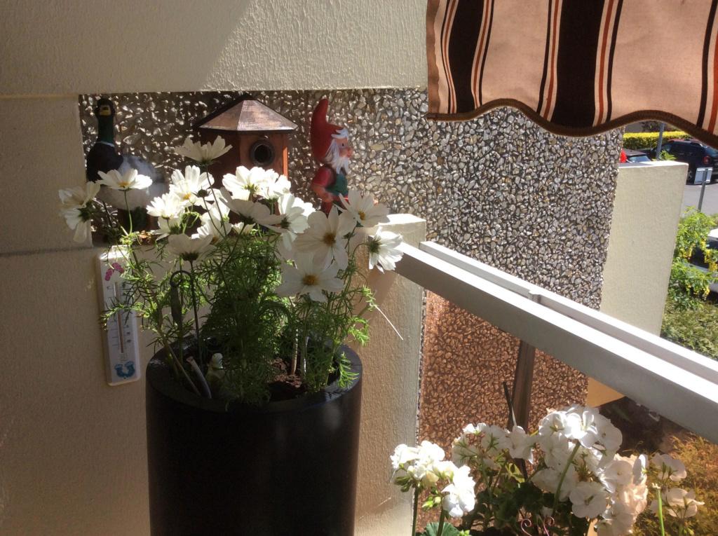Mon balcon, c'est mon jardin.. Unname15