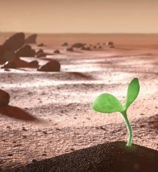 Comment coloniser Mars à partir de ses ressources ? - Page 27 Cultiv10