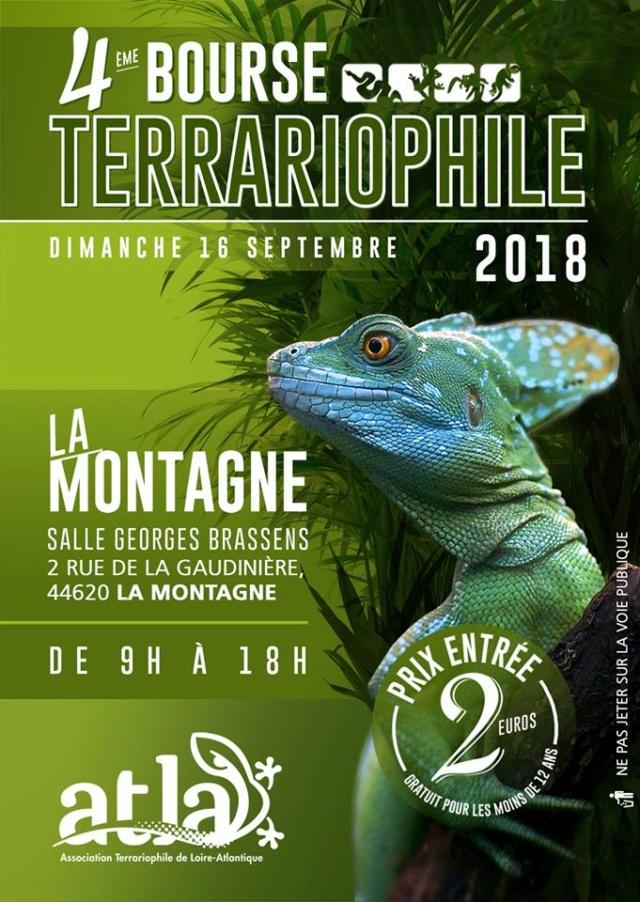 4ème Bourse Terrariophile 16/09/2018 La Montagne (44) 39036810