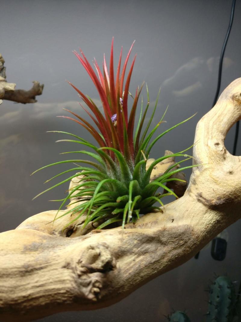 Plantes terrarium  Img_2039