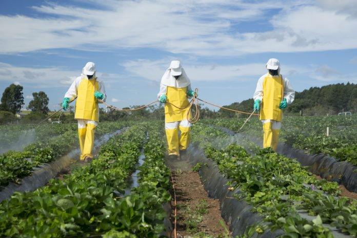Contre les parasites, l'agriculture biologique serait plus efficace que les pesticides Pestic10