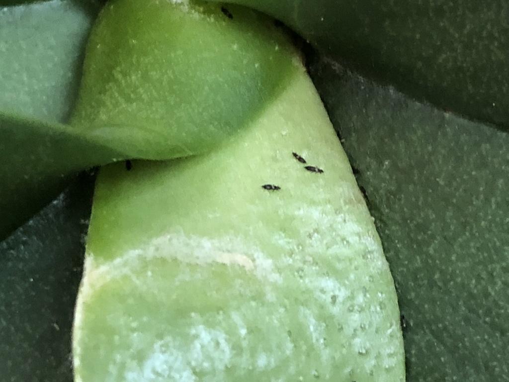 Suche dringend Antworten und Hilfe für meine Orchideen (Schädlingsbefall) Img_5112