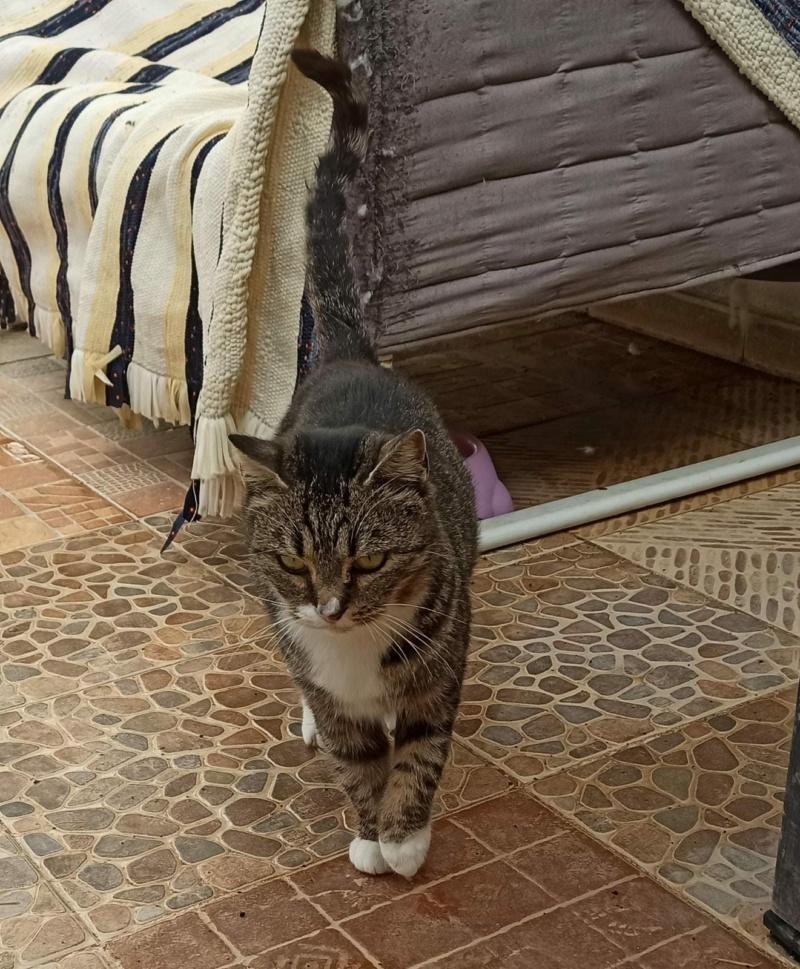 RUBI - TIGRÉE ET BLANCHE - adoption avec Silvio -  (SAC) 00888c10