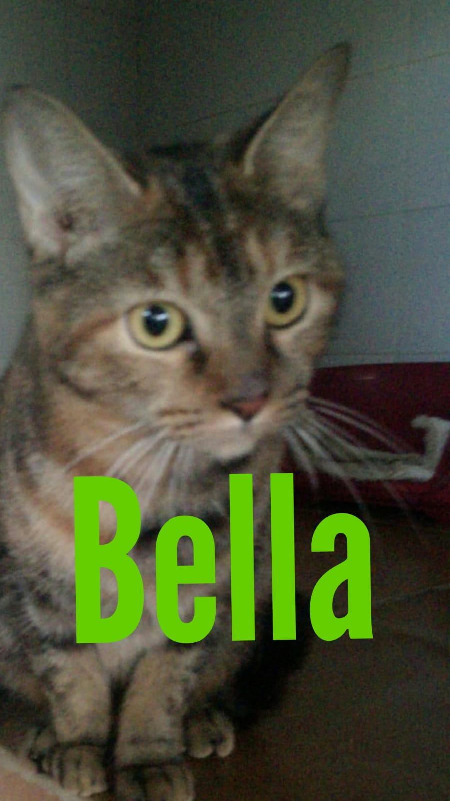 BELLA - TIGRÉE - En FA dans le 27 2133ec10
