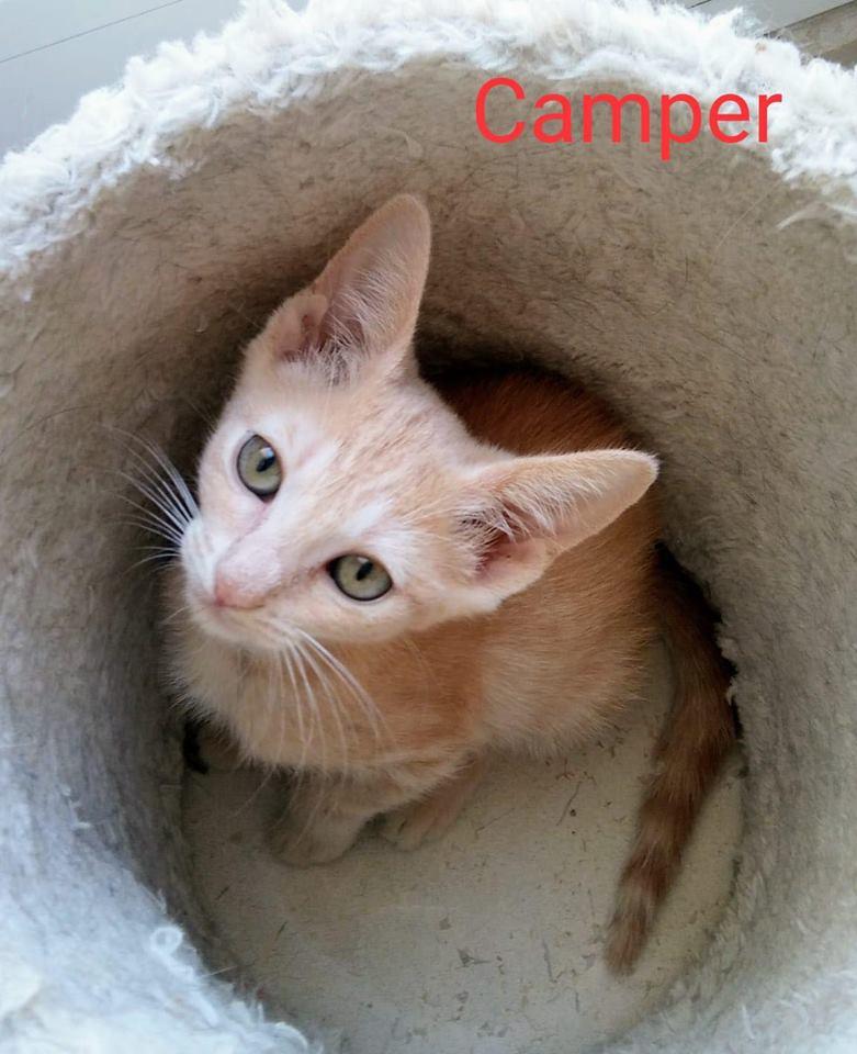 CAMPER - ROUX - (Sole) 41447910
