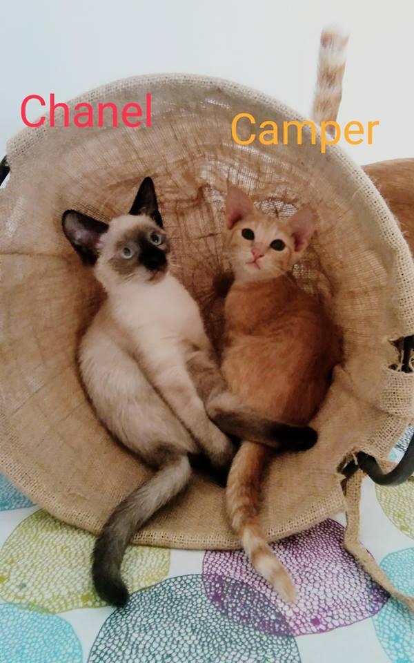CAMPER - ROUX - (Sole) 41448710