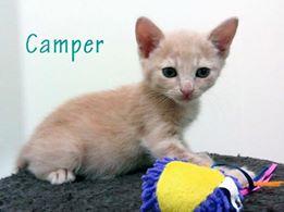CAMPER - ROUX - (Sole) 41476410