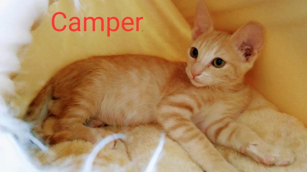 CAMPER - ROUX - (Sole) 41477410