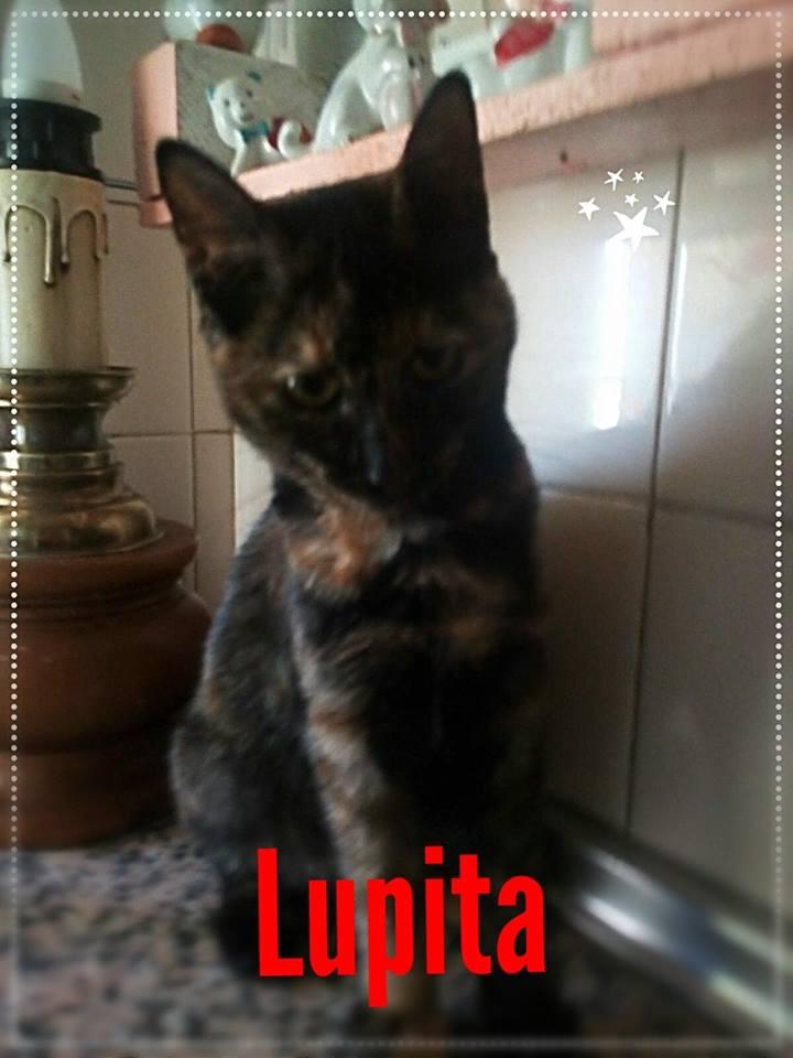 LUPITA  - ECAILLE DE TORTUE - (Marilo) 42600210