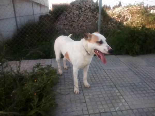 REMO - ES (Marilo) 52602510