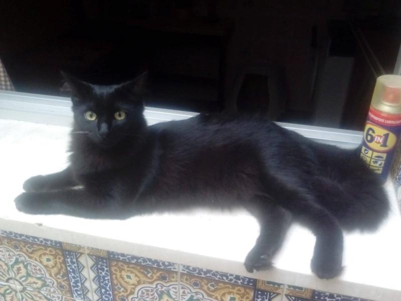 PETHYA - Noire Poils mi-longs - (Angela) Ad491710