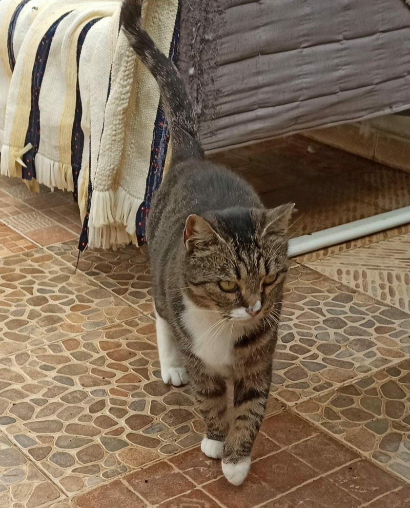 RUBI - TIGRÉE ET BLANCHE - adoption avec Silvio -  (SAC) B1911a10