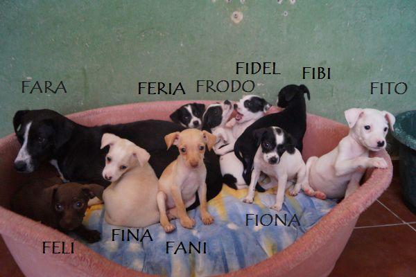 FIONA - Croisée petite taille - (Sole) Zfara10