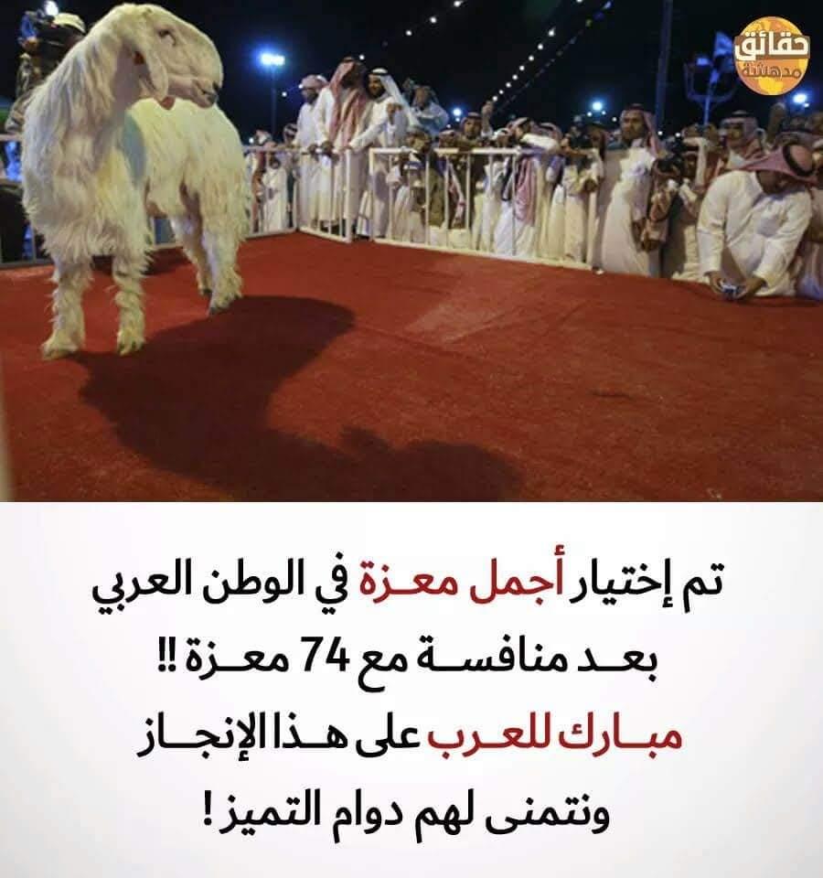 اختيار اجمل عنزة بالوطن العربي Fb_img14