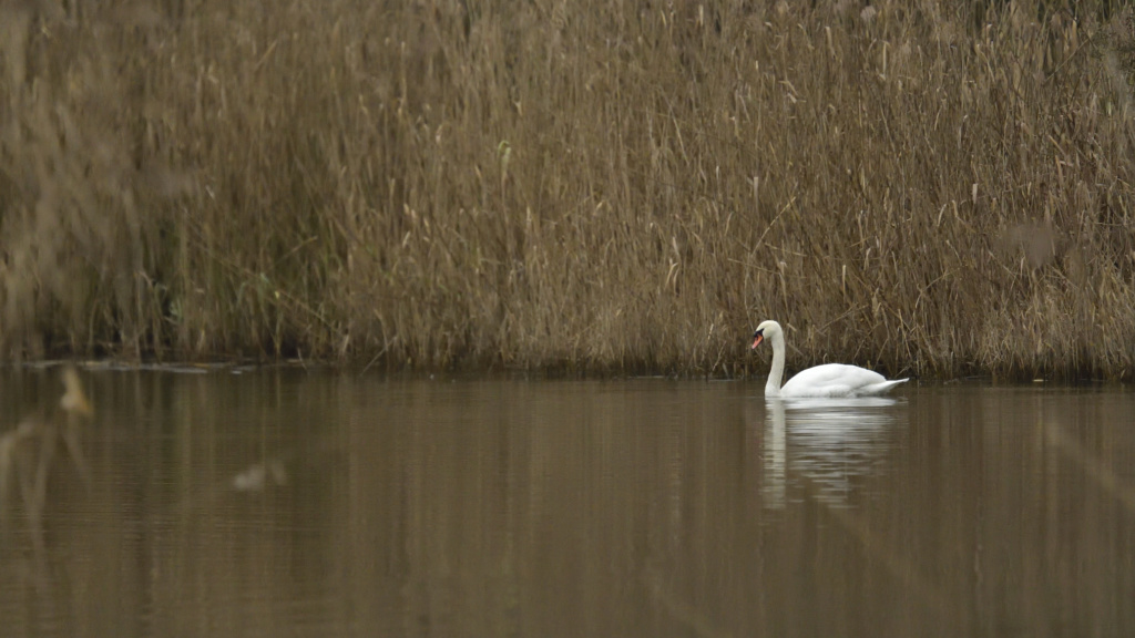 Denis observation 2019 Cygne_12