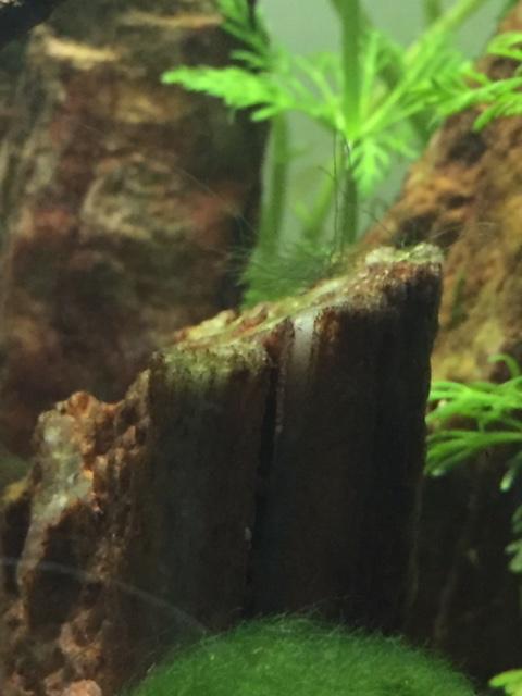 [HELP] Pousse d'algue inconnu Image114