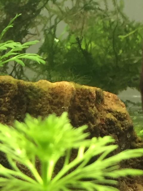 [HELP] Pousse d'algue inconnu Image212