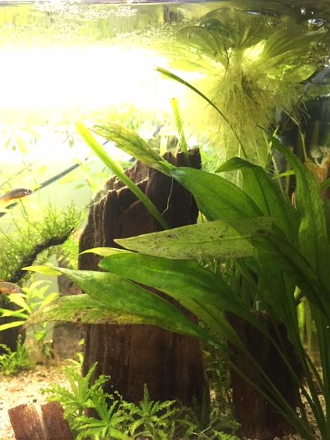 plantes qui jaunissent Img_7610