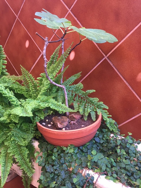 Mis proyectos de bonsais Img_0112