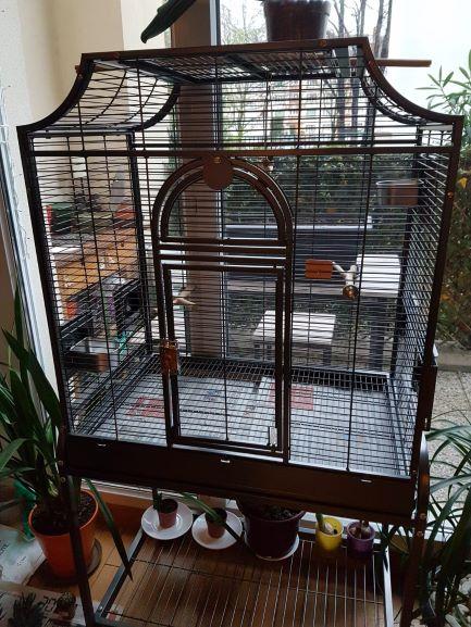 Préparation pour accueillir des perruches ondulées Img-2010